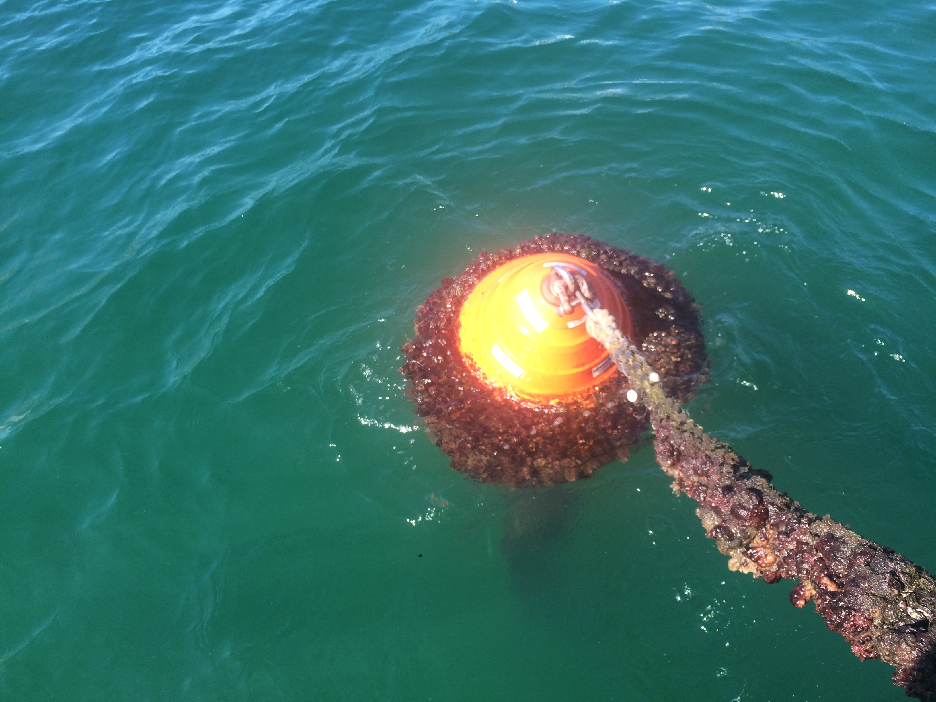 Bouy Replacement